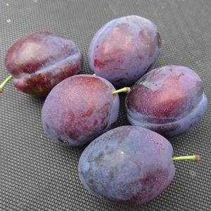 Pflaumenbaum  'Valor'