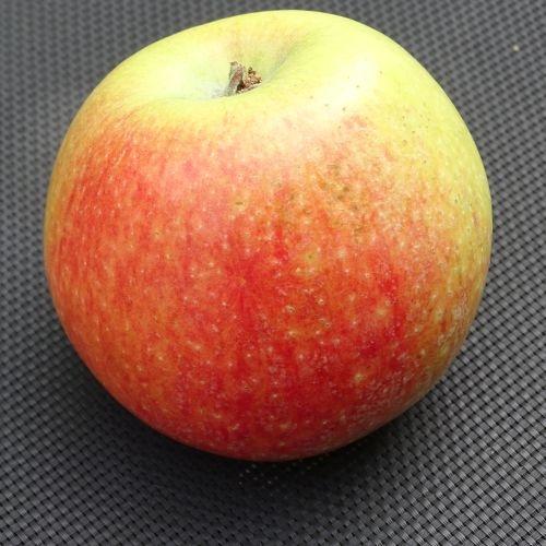 Apfelbaum  'Alkmene'
