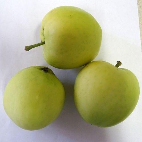 Apfelbaum  'Transparente Jaune´